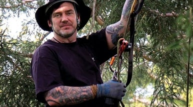 Cool Jobs: Professional Tree Climber