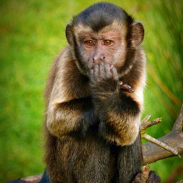 Monkeys Stay Away from Mean People
