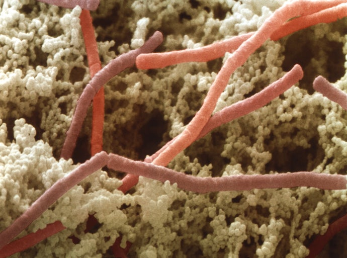 Spaceflight Alters the Gut Microbes of Mice and Men
