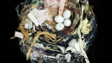 Treasure in the Trees: Scientific Clues in Birds' Nests [Slide Show]