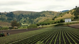 Autism Risk Higher Near Pesticide-Treated Fields