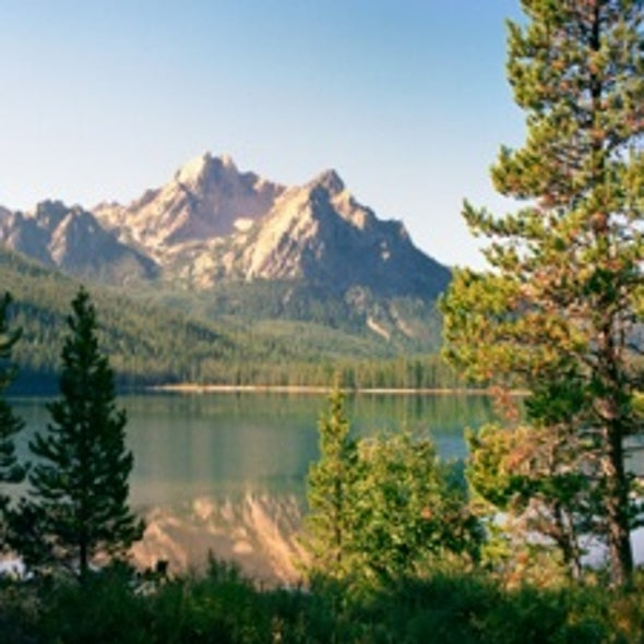 U.S. Forest Service to Adapt Woodland Management to Climate Change