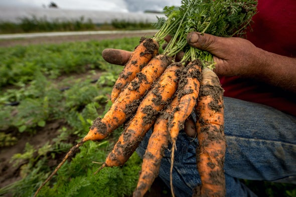 Intensive farming produces less nutritious food - organicgarden org uk