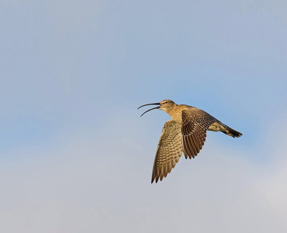Extreme Birding Competition Is a Cutthroat Test of Skill, Strategy and Endurance