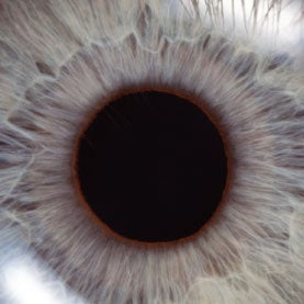 Pupils Dilate or Expand in Response to Mere Thoughts of Light or Dark