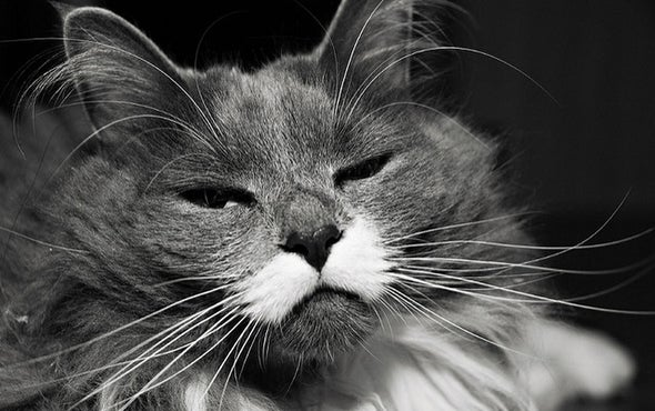 How Does Catnip Work Its Magic on Cats?