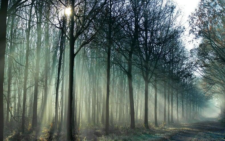 Diverse Tree Portfolio Weathers Droughts Better - Scientific American