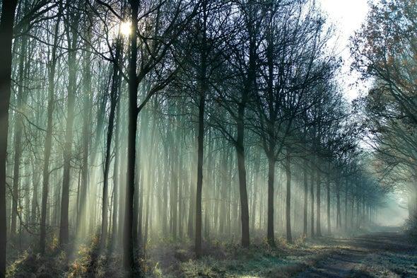 Diverse Tree Portfolio Weathers Droughts Better