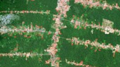 City Dwellers Drive Deforestation in 21st Century