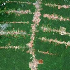 fish-bone-deforestation-in-brazil
