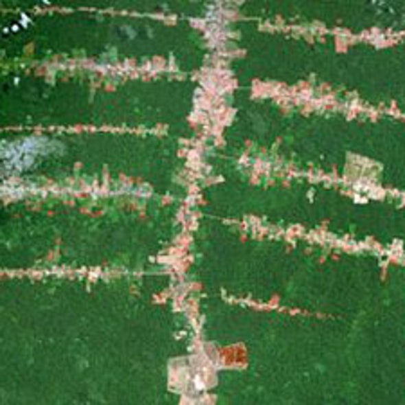 City Dwellers Drive Deforestation in 21st Century