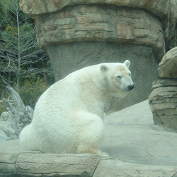 Can Zoos Play a Role in Climate Change Education?