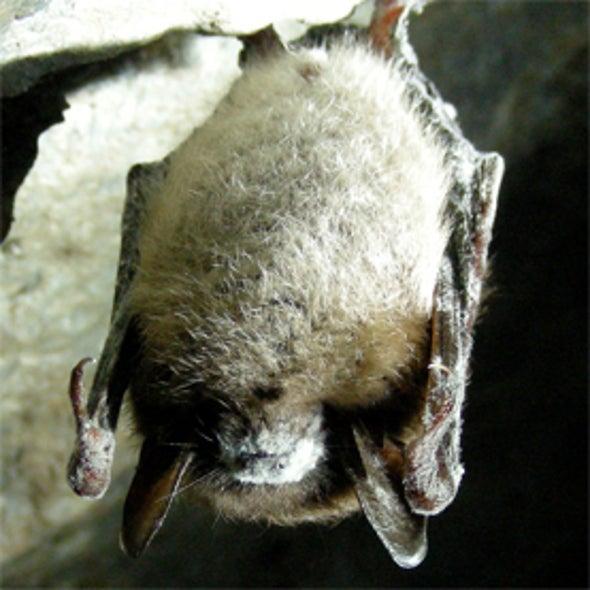 Wisconsin Bat Monitoring Program