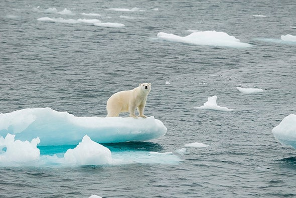 Polar Bear Metabolism Cannot Cope with Ice Loss