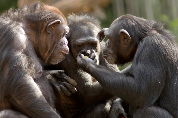 Chimpanzees Show Altruism while Gathering around the Juice Fountain
