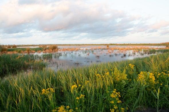 National Park Nature Walks, Episode 9: Inside a Migratory Bird Sanctuary