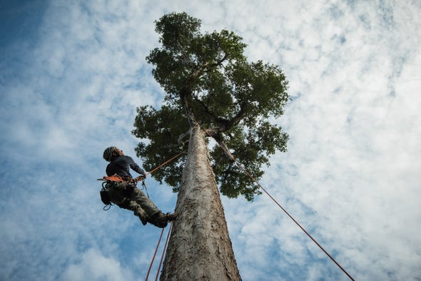 Can the Amazon Save the Planet?