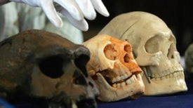 How Hobbits Happened: The Evolution of <i>Homo floresiensis</i>