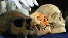 How Hobbits Happened: The Evolution of <i>Homo floresiensis</i>