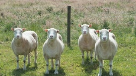 """Send in the Clones: Cloned Mammals Are Just as Healthy as Their """"Natural"""" Counterparts"""