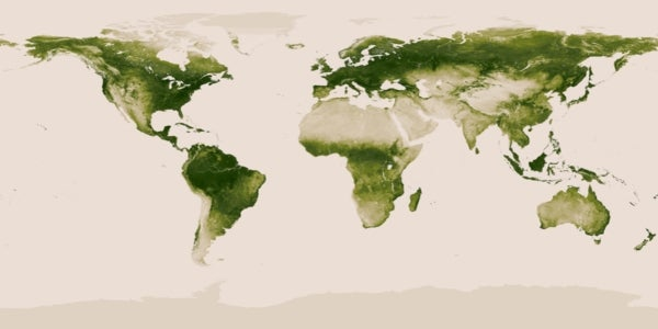 A Year in the Life of a Green Planet