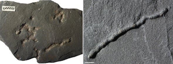 Did Crawling Critters Leave These Cracks? The Answer Could Rewrite Evolutionary History