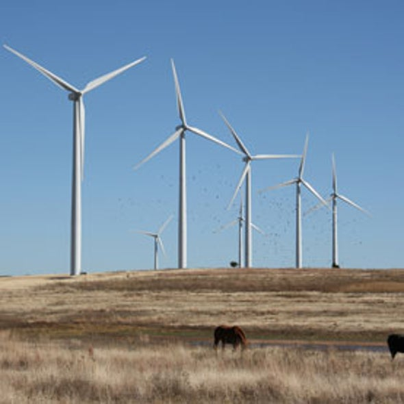 Wind Power Urged to Compete with Fossil Fuels Head-On