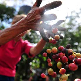 Coffee grower