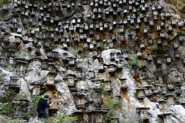 Beehives on a Cliff Wall Are Protected from Predators and Pesticides