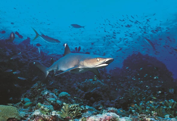 DNA Samples Find a Lot of Fish in the Sea