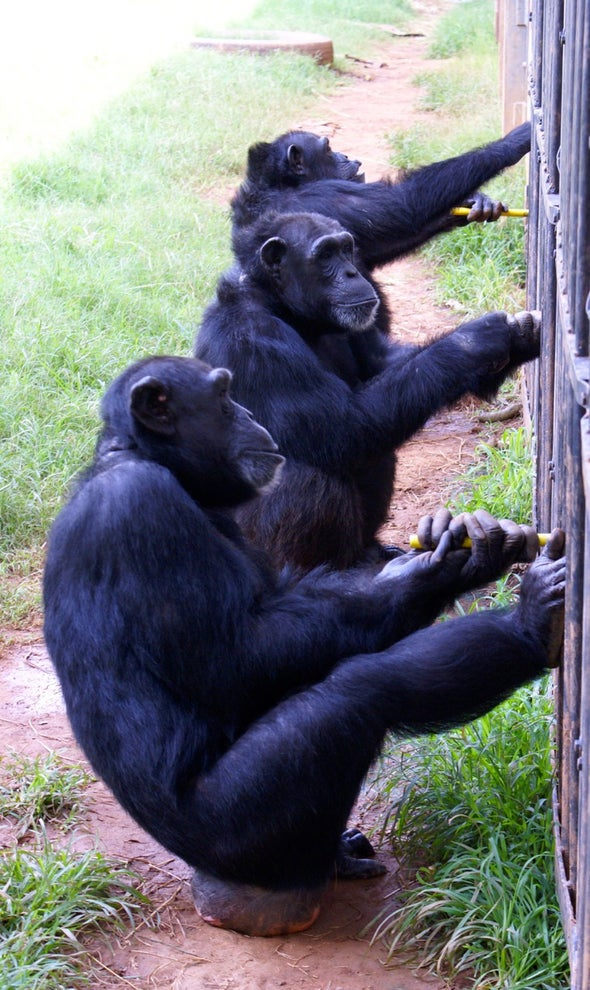 Collaborating Chimps Make for a Sweet Deal