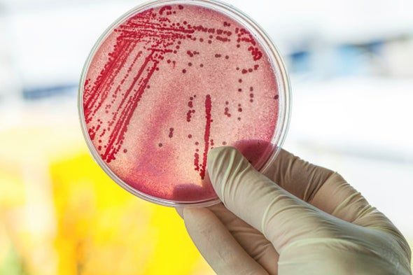 New Drugs May Come from Microbes in Our Guts