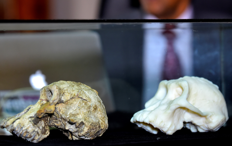 "Rare 3.8 Million-Year-Old Skull Recasts Origins of Iconic ""Lucy"" Fossil"