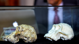 """Rare 3.8-Million-Year-Old Skull Recasts Origins of Iconic """"Lucy"""" Fossil"""