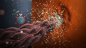 Immunology of the Rheumatoid Joint