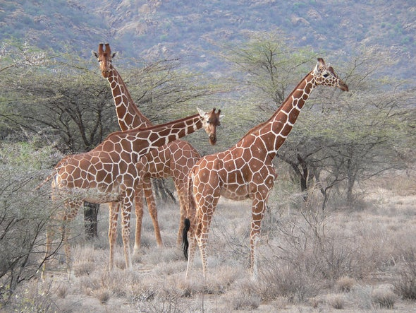 Zooniverse: Wildwatch Kenya
