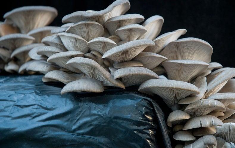 Mushroom Training In Dhule