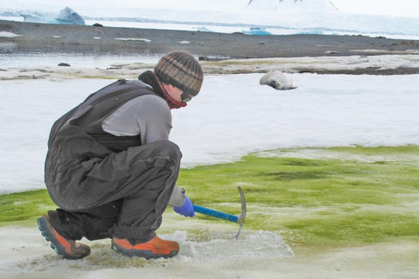 In Summer, Antarctic Snow Turns Green with Algae