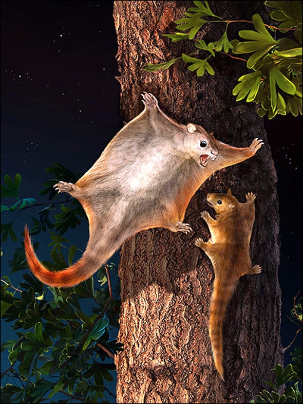 Flying Attack Squirrel