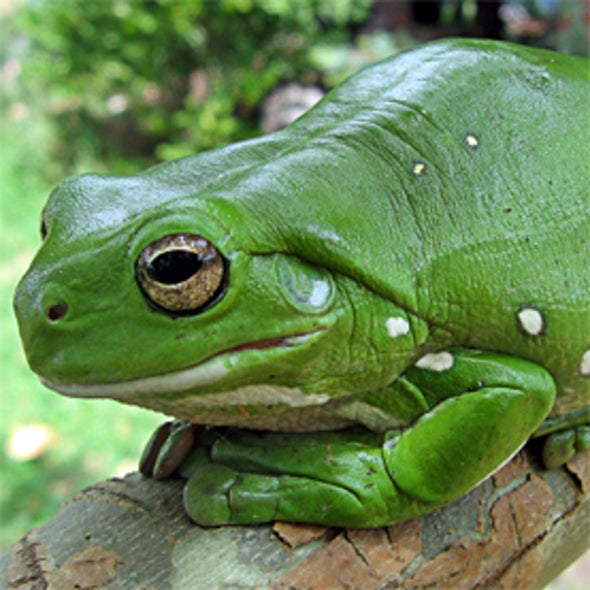 <i>iNaturalist.org</i> Global Amphibian Blitz