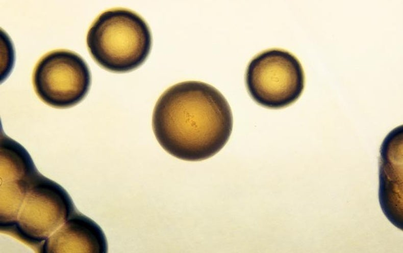 Vaccine Shows Protection against Gonorrhea for First Time