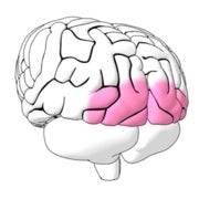 Social Cues in the Brain [Interactive]