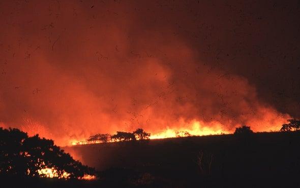 Deforestation Ticks Up in Brazil's Savanna