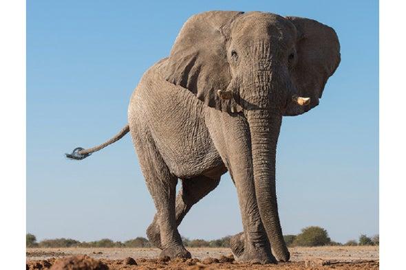 Elephant Footprints Teem with Life