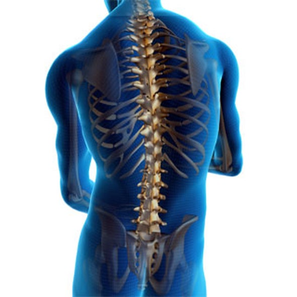 New Bone Cement Could Improve Spinal Treatments for Osteoporosis Sufferers