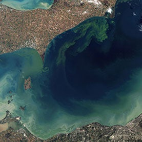 Algal Blooms May Become the Norm in Lake Erie