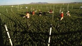 CO2 Makes Growing Seasons Longer
