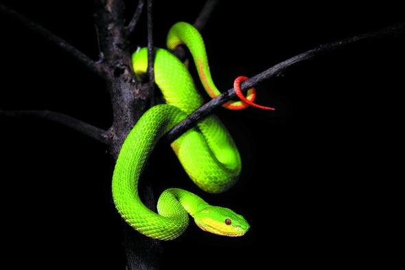 Snakes' Flexible, Heat-Sensing Organs Explained