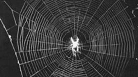 Why is spider silk so strong?