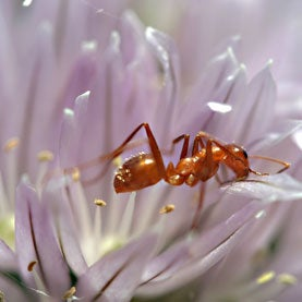 Ant on flower in Seagrove, North Carolina